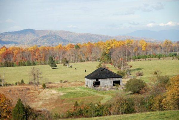 Autumn in Poplar Forest
