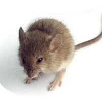 Got Mice in your RV? Here's how to get rid of them for good!